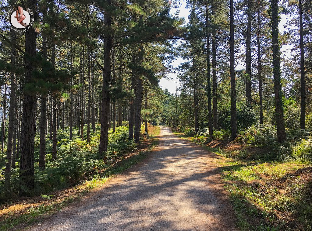 Camino Bosque de Oma