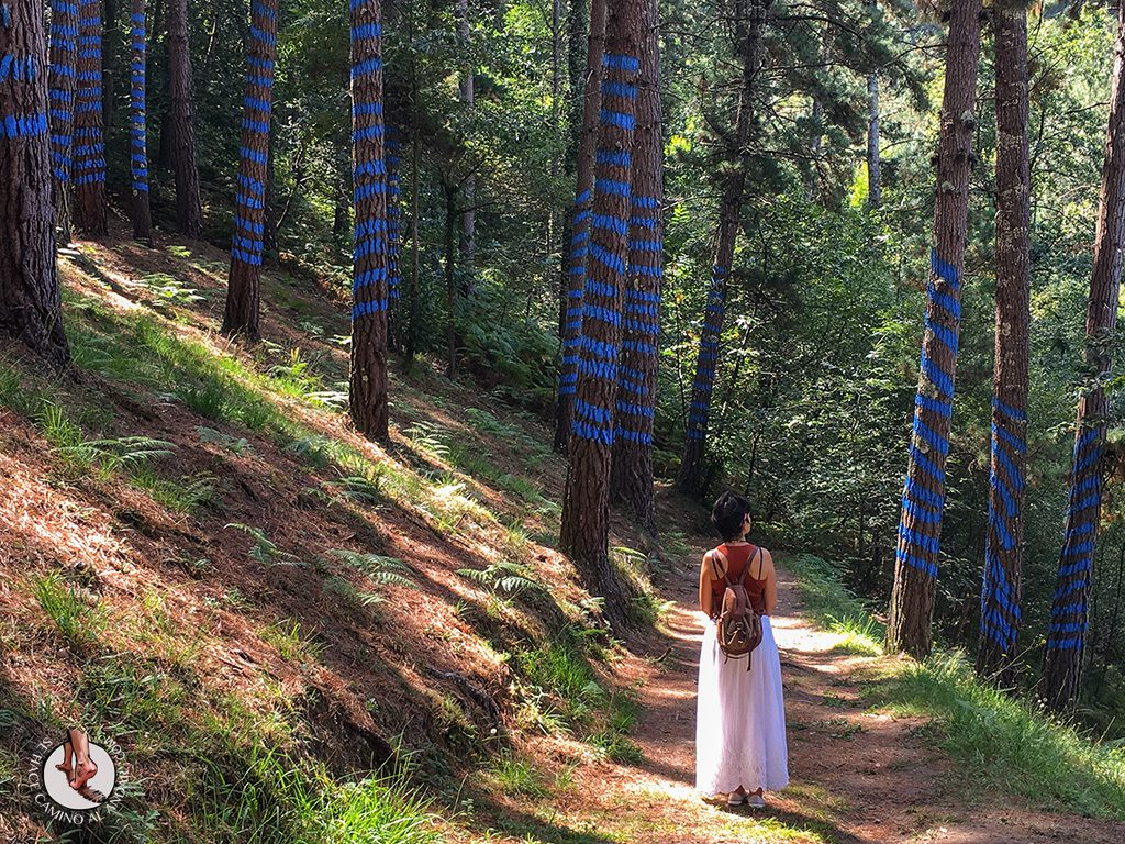 Excursión al Bosque de Oma