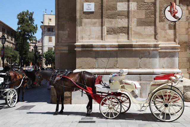 Que ver en Mallorca 12 chalo84