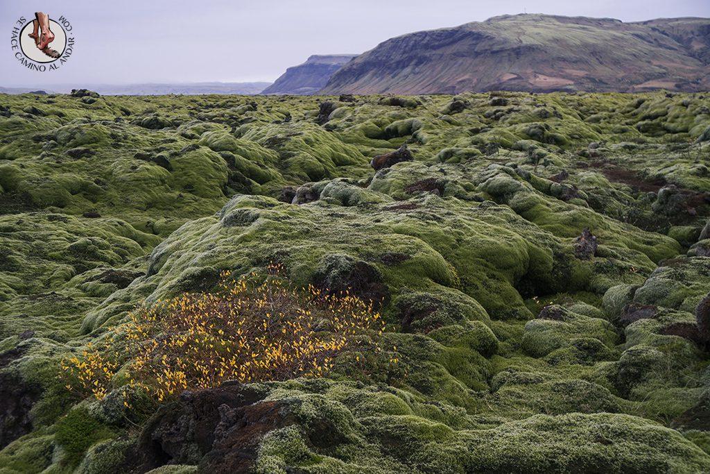Ring Road 2-7 campo lava arbusto