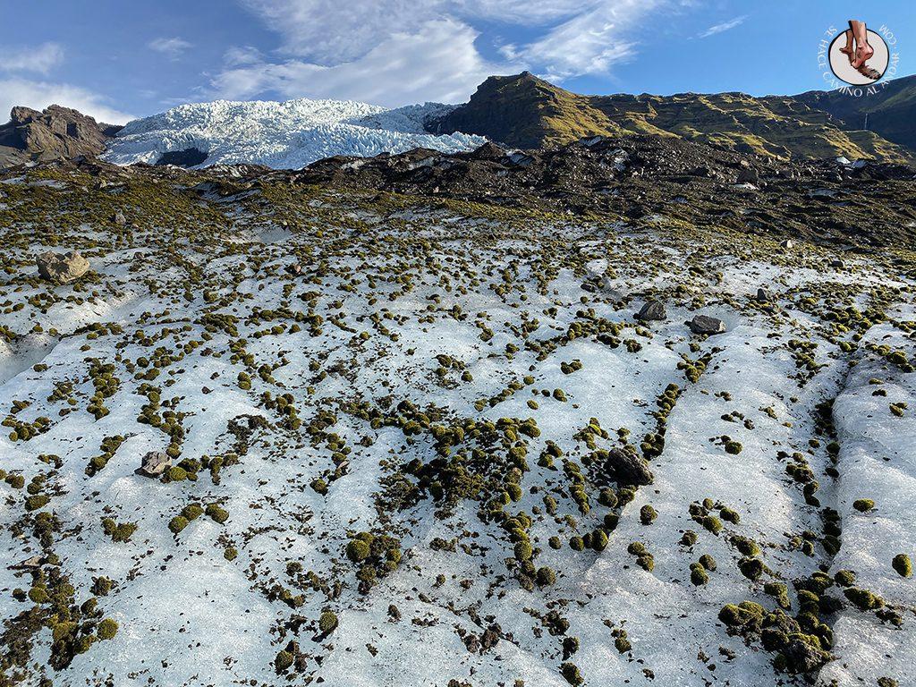 Trekking-glaciar-Falljokull-piedra-musgo