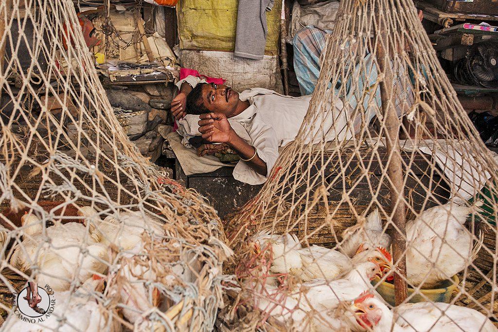 Vendedor gallinas mercado de calcuta