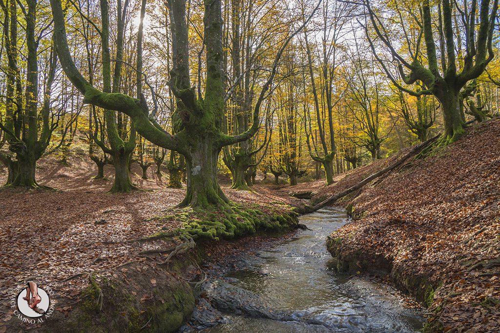 Visitar el hayedo de Otzarreta, un bosque mágico en el Gorbeia