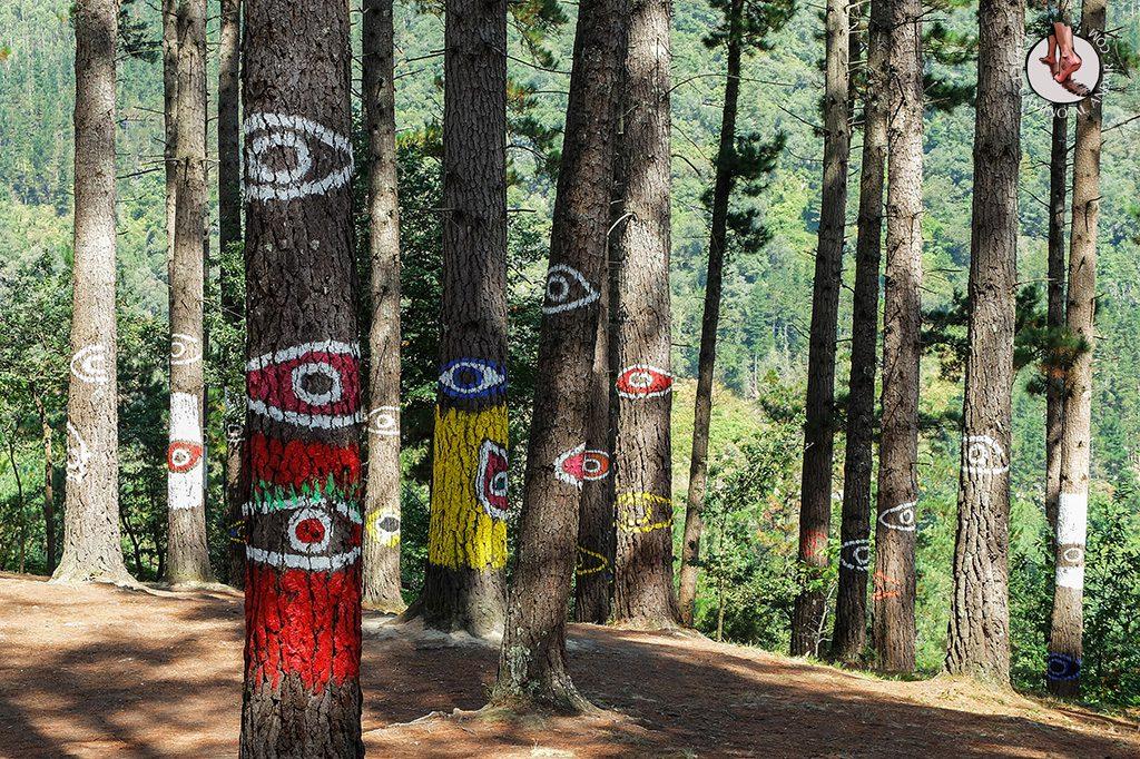 bosque de oma arbol 3 ojos