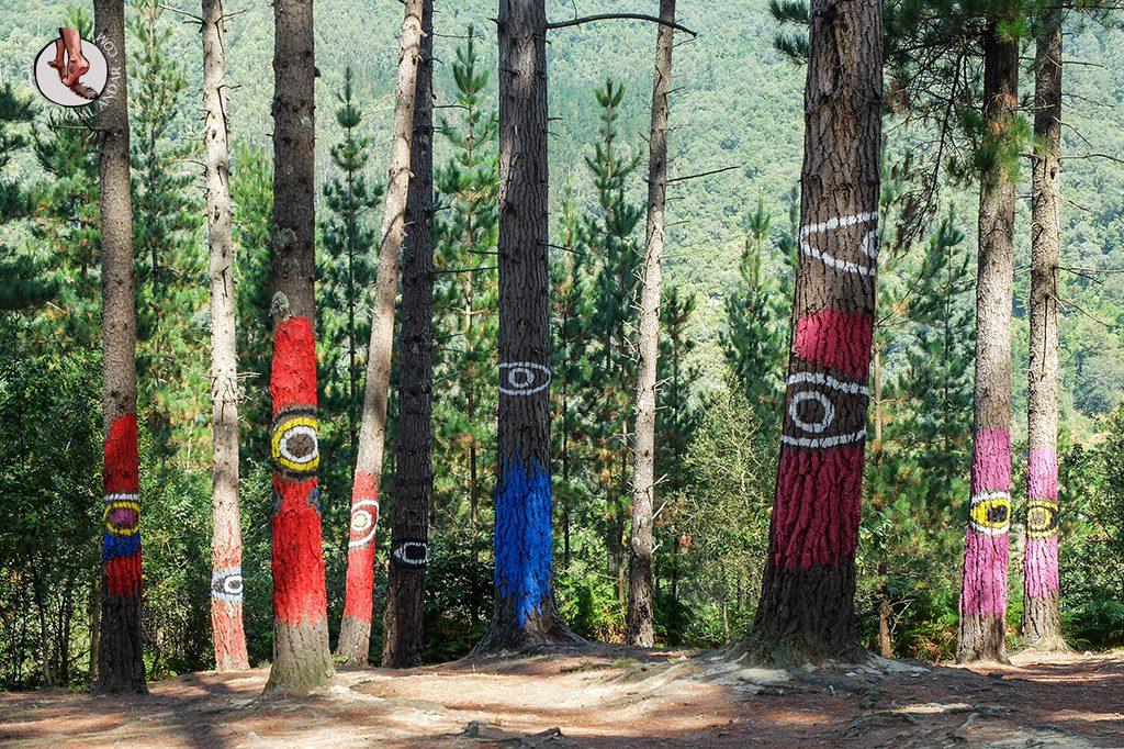 bosque de oma collage ojo