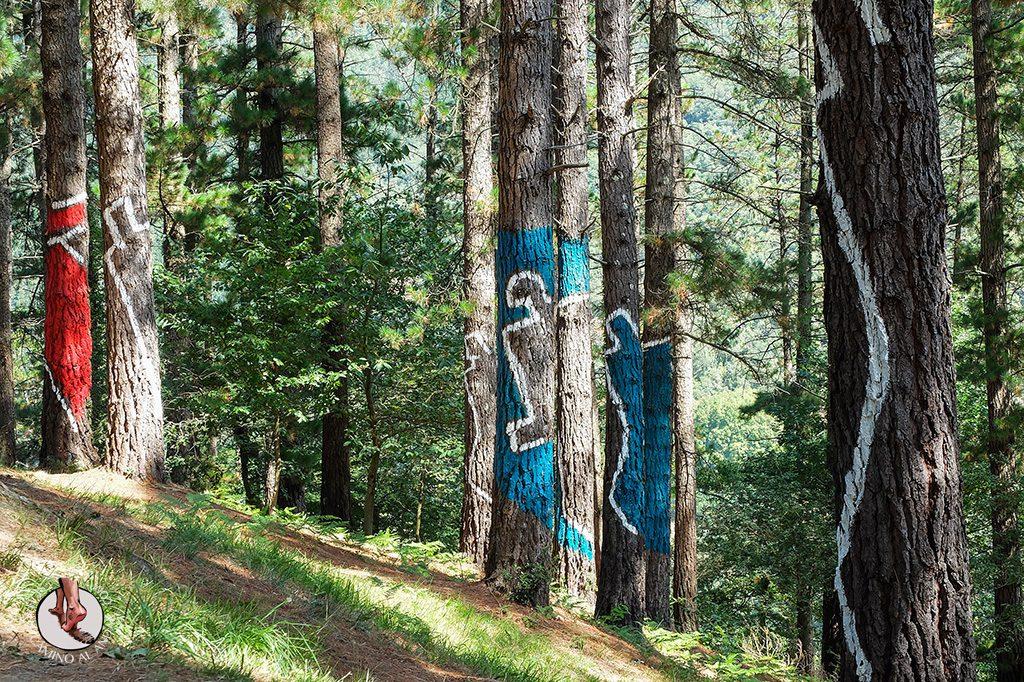 bosque de oma imagen personas