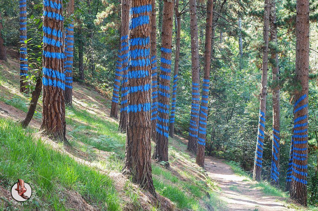 bosque de oma lineas azules