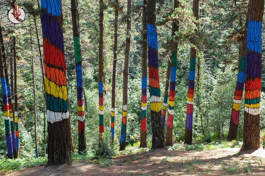 bosque de oma lineas color