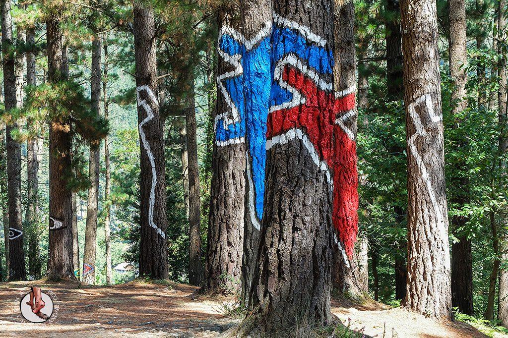 bosque de oma personas conjuntas