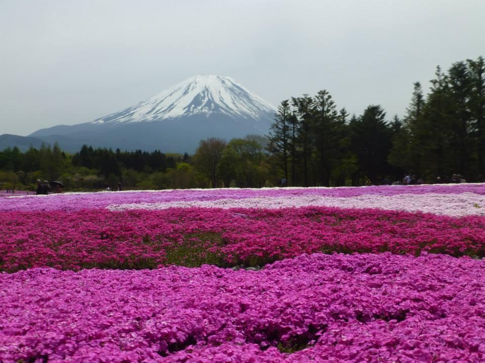 nakie al mundo japon