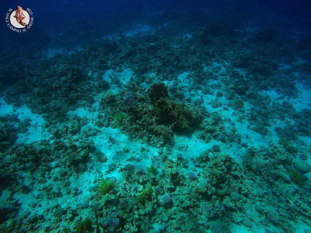 organizar viaje a jordania mar rojo coral