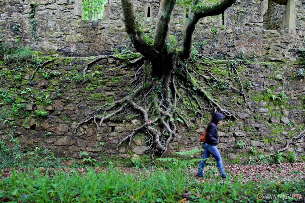 parque ametzagaina intxaurrondo raices