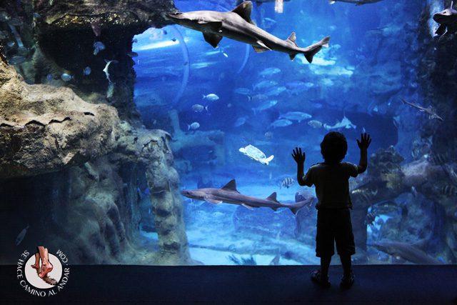 Aquarium San Sebastian chalo84