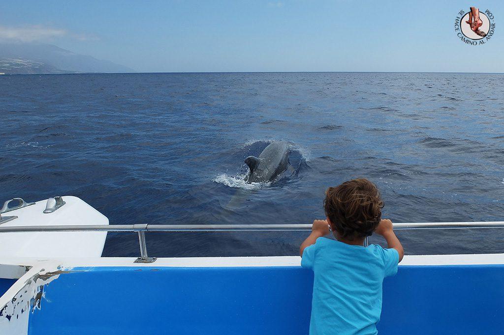 Avistamiento delfines ballenas La Palma