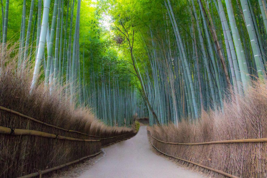 Pack and click bambu