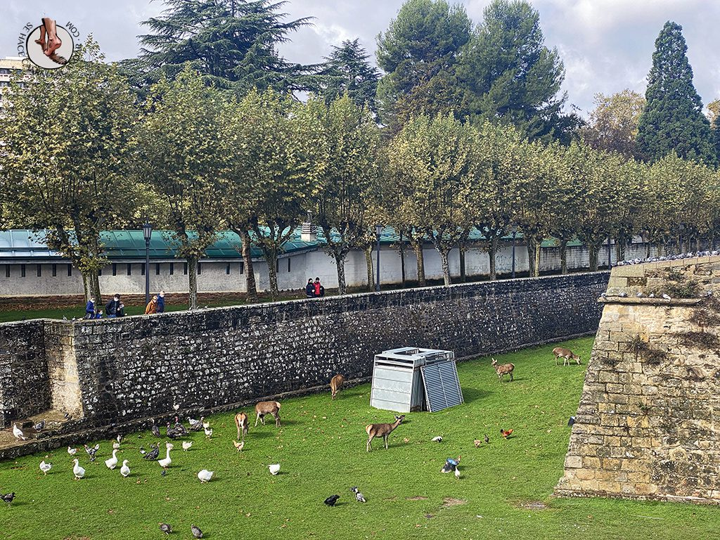 Pamplona jardines taconera ciervo