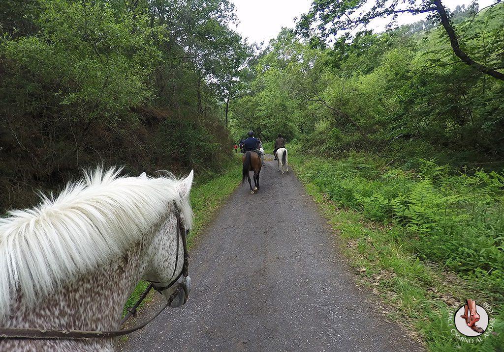 Paseo caballo Castillo Butrón
