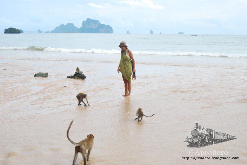 playa-de-los-monos