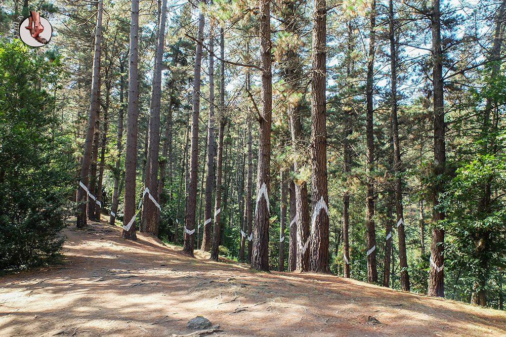 bosque de oma angulos