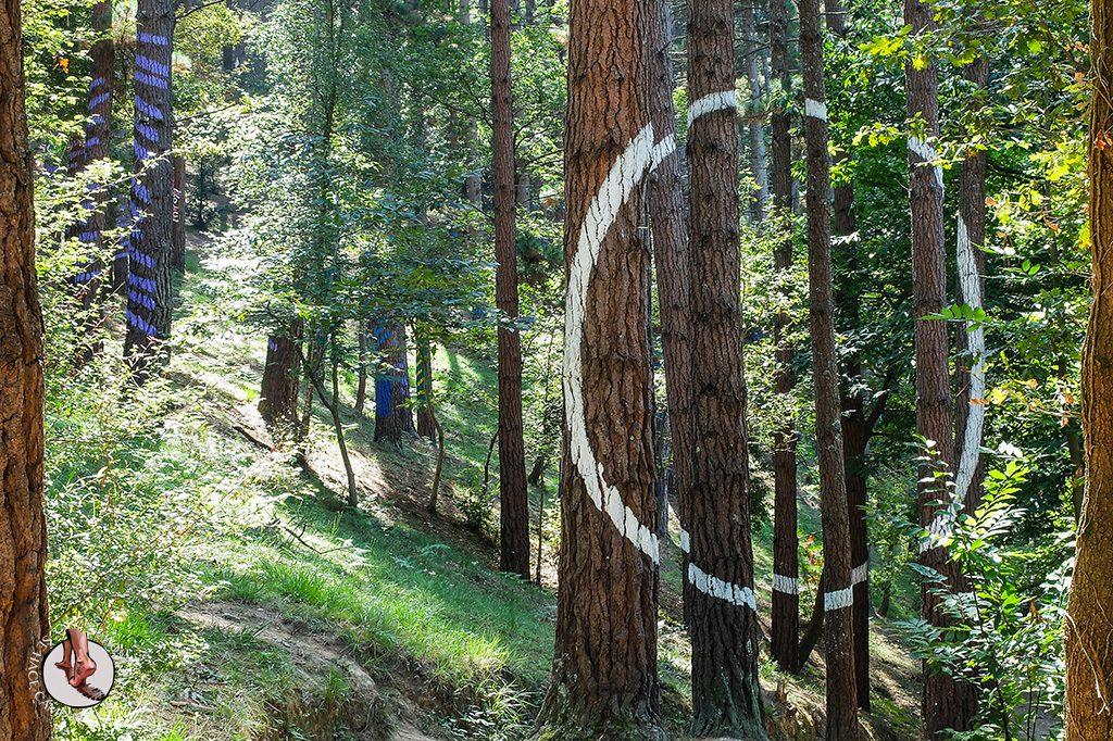 bosque de oma circulo