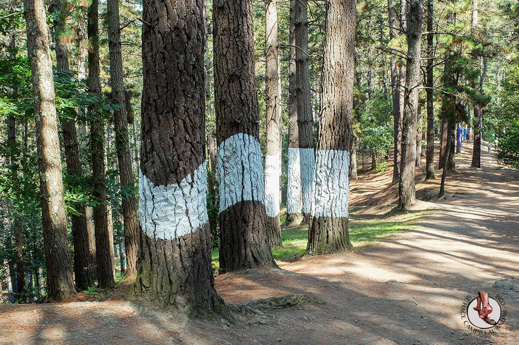 bosque de oma linea gorda