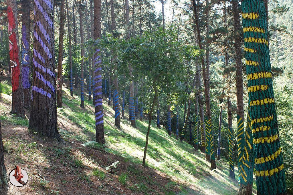 bosque de oma lineas de colores