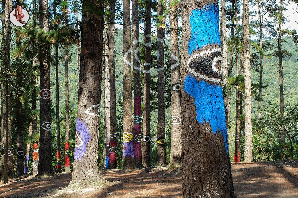 bosque de oma ojo gigante