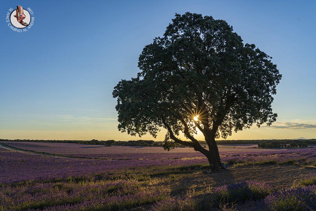 campos guadalajara arbol sunstar