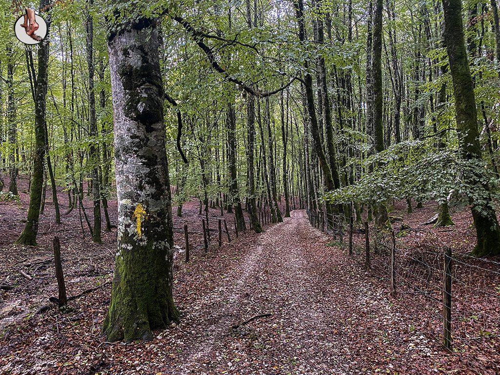 cs1 roncesvalles zubiri camino santiago flecha