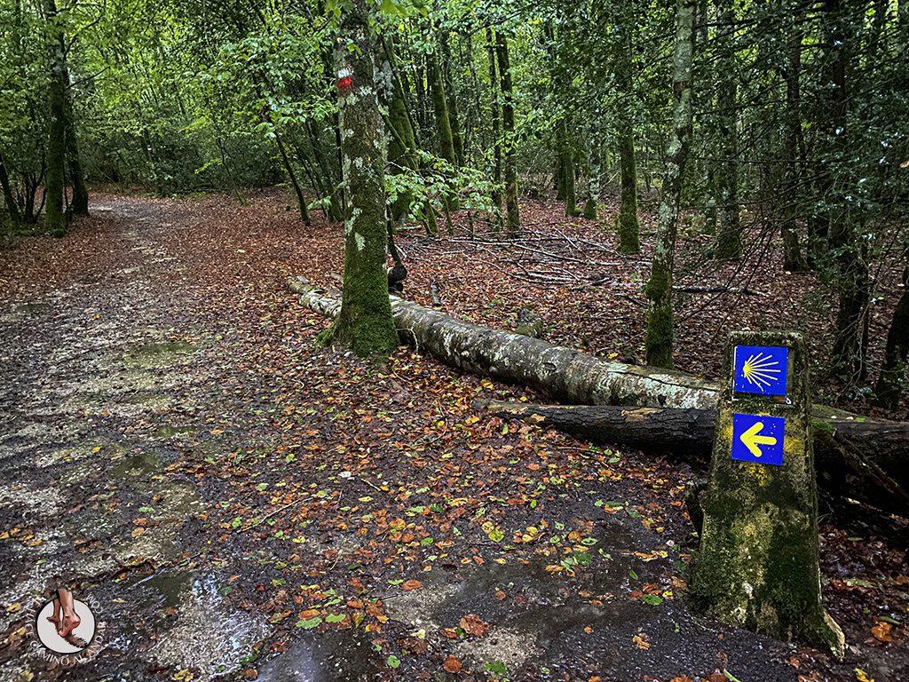 cs1 roncesvalles zubiri camino santiago
