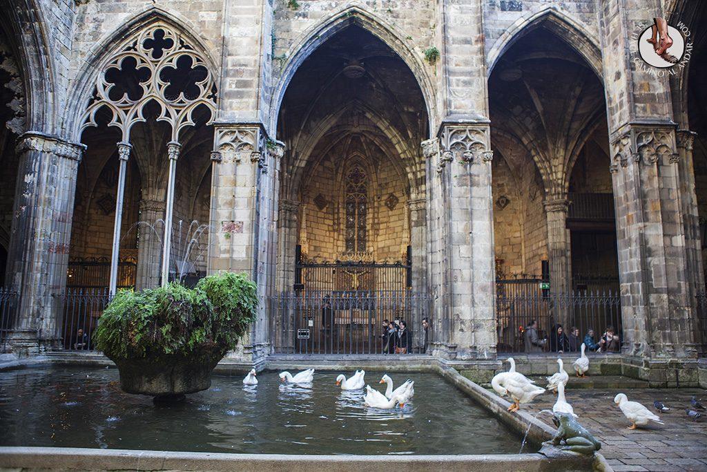 que ver en Barcelona catedral patio cisnes