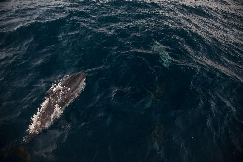 que ver en tarifa avistamiento ballena delfin