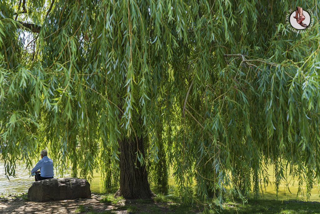 que ver pamplona parque yamaguchi arbol